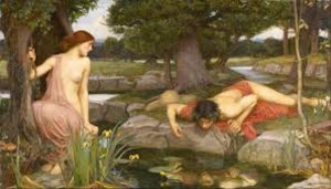 Narcissus_large